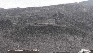 Locusts sweep through Taiz City and surrounding districts